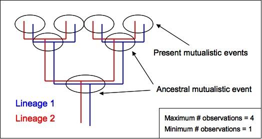 phylogeneticBias2.jpg